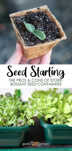 The pros and cons of store-bought seed starters from your garden center or supply store. There are many different options for starting seeds with purchased containers but not all of them will give your seedlings the best start. Learn which ones are best. #gardentherapy #gardentips #gardenhacks #gardening