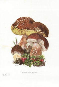 Vintage Mushroom Poster // Cèpe des pins by ByVioletteB on Etsy, €8.00