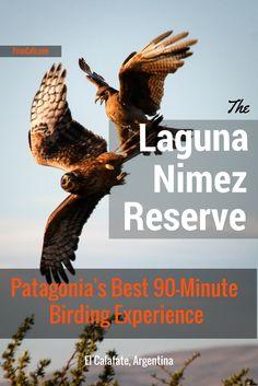 Laguna Nimez Reserve, El Calafate, Argentina - the best 90-minute birding in Patagonia from Piran Cafe