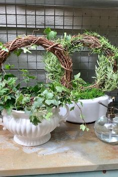 Shade Garden Plants, Indoor Plants, Container Flowers, Edible Flowers, Topiary, Plant Decor, Grapevine Wreath, Houseplants, Container Gardening