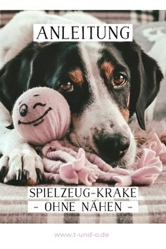 Kraken, Life Hacks Pictures, Hair Up Or Down, Flower Crown Headband, Life Quotes To Live By, Dog Costumes, Happy Dogs, Shih Tzu, Flowers In Hair