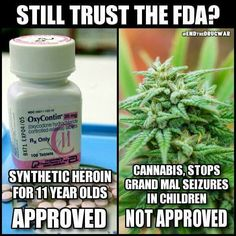 """And now, the FDA is making recommendations that make it harder for chronic pain suffers to get Oxy. They do this while also recommending pain specialists no longer test their patients for marijuana use. Mixed messages much? """"Don't take the drug we've pushed for years but do take the drug that can still land you in jail."""" Neither of which treat all pain patients equally! Pain patients need more options not moral platitudes, intimated doctors, and mixed messages from the Feds."""