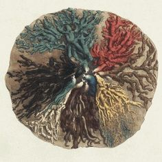 Breast's anatomy, 1840, designed by Sir Astley Paston Cooper.