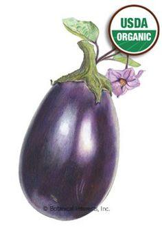 Eggplant Black Beauty Organic Heirloom Seed