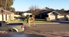 Two Boxing Kangaroos Duke It Out On A Suburban Street In Australia