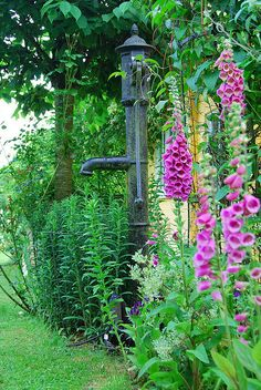 Love pump and the purple foxgloves..great picture