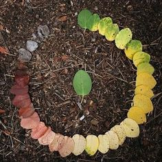 Circle of Life.