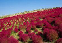 Park Hitachi potěší milovníky květin během celé sezóny Park, Vineyard, Outdoor, Outdoors, Vine Yard, Parks, Vineyard Vines, Outdoor Games, The Great Outdoors