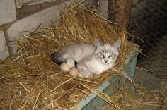 鶏小屋にいくつかの卵の上に座って今愚かなように見えるが、あなた&#39可能性があります。それから学ぶ再!