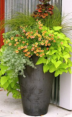"Potato vine, silver lotus vine, ""million bells,"" stipa grass, purple coleus-for front pot"
