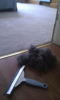 Chlpy zo psa odstránime stierkou na okno.