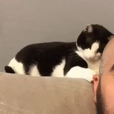 Cat playing with owner's ear