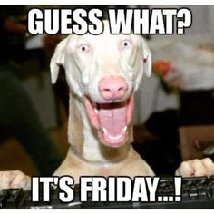 Friday is here and people are searching for happy friday memes to warm up for all the weekend madness. We have complied the best 25 funniest friday memes for you to read and enjoy. Funny Weekend Memes, Tgif Meme, Funny Quotes, Funny Memes, Hilarious, Jokes, Humor Quotes, Funny Dogs, Its Friday Quotes