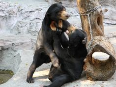 """See 782 photos from 4440 visitors about spacious, beer, and park. """"Must see famous touristic place in Japan. Black Bear, Osaka, Four Square, Japan, Park, Animals, Animales, American Black Bear, Animaux"""