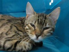 Adoptable Animals - Cats | Edmonton Humane Society
