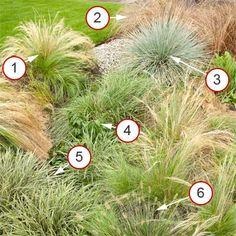 rain garden of grasses. Mexican Feather Grass Leather-leaf Sedge Blue Oat Grass Kelsey Dwarf Dogwood 'Ice Dance' Japanese Sedge 'Little Bunny' Dwarf Fountain Grass