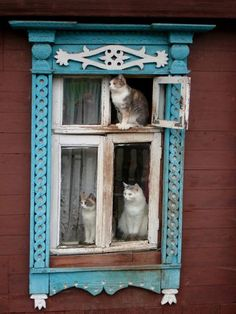 Lovely trio of kitties