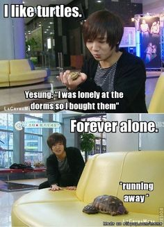 ... If I dress up as a turtle, will you love me? Don't worry Yesung, you have Wookie!