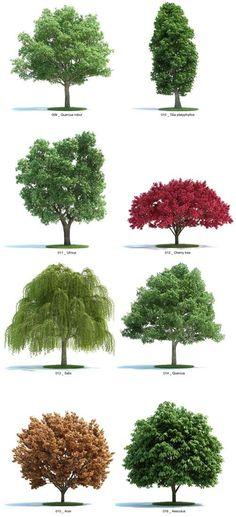 Verdes - árboles: