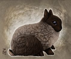 Netherland dwarf by kippurable.deviantart.com on @deviantART