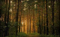 А вы давно были в лесу? Немного созерцания.... Обсуждение на LiveInternet - Российский Сервис Онлайн-Дневников