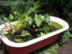 beautiful bathtub pond.