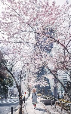 ロシア人写真家「日本の美しい春を紹介する」 おとぎ話の世界のような写真の数々に外国人が絶賛 海外の反応