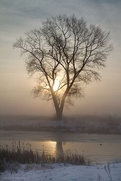 *Misty Morning  (by Edwin's Mixed Bag)