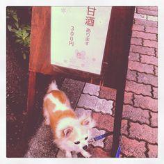 [甘酒*2012/04/02]    甘酒飲みたいらしい△^ェ^△