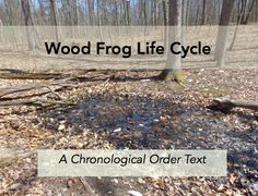 Wood Frog Life Cycle - an activity I authored on ActivityCircle. ActivityCircle By Frolyc - Create. Lifecycle Of A Frog, Frog Life, Digital Text, Life Cycles, Student Learning, Cycling, Author, Inspire, Teaching