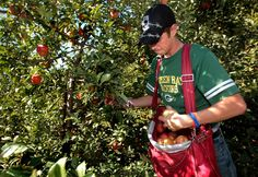 2012 state apple figures reflect meager harvest