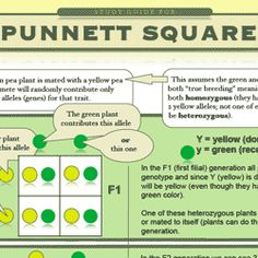 Biology study guides created by Biology 101 - punnett square study guide