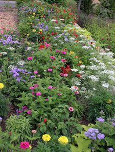 It's time to plan for planting Annuals. Love the color!