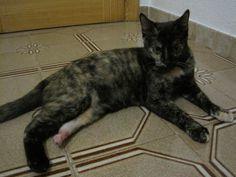 PATTY - Gato adoptado - AsoKa el Grande