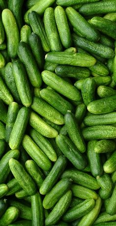 # vegetables #pickling cucumbers are very sweet.