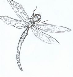 pictures of dragon flies | dragonfly by ~embryo-spark on deviantART