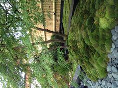 Mossen onder meerstammige boom - chique!