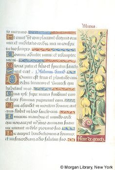 Book of Hours, MS M.732 fol. 7r - Images from Medieval and Renaissance Manuscripts - The Morgan Library & Museum