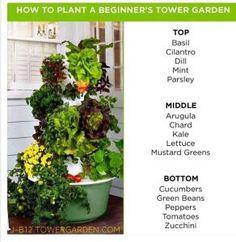 Beau Tower Garden Growth