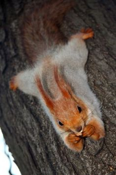 squirrel - - The ethology of emotions and empathy Nature Animals, Animals And Pets, Baby Animals, Funny Animals, Cute Animals, All Gods Creatures, Cute Creatures, Beautiful Creatures, Animals Beautiful