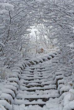 I magici disegni di un bosco innevato. #Dalani #Neve #Outdoor #Fineanno