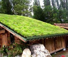 Fabriquer soi-même une toiture végétalisée : mode d'emploi Plus