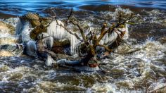 Shooting the Rapids on the Seine River in Manitoba