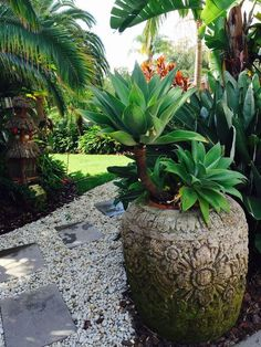 Agave attenuata mixing it up with palms, cannas, birds of paradise and  other tropical plants in a Bali-esque garden. Photo: unknown. #Succulents_tropical_landscape #agave_attenuata #SerraGardens_agave