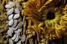 Floare de bostan | Natura Statica - Seminte - PxlShot.ro
