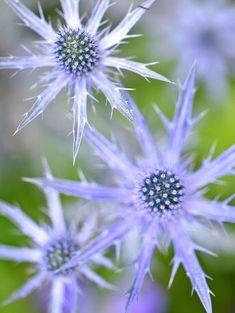 barrenwort Unique Flowers, Cut Flowers, White Flowers, Beautiful Flowers, Rose Flowers, Flowers Garden, Purple Flowers, Exotic Flowers, Yellow Roses