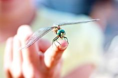 i had a conversation with a dragonfly today, he was so cool as he tilted his head to listen and look at me...8-6-11