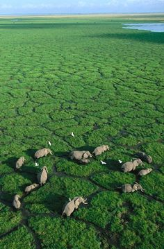 In the lush African Wetland in Kenya.