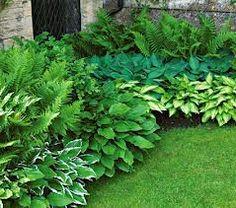 Hosta & fern garden - I like the different greens