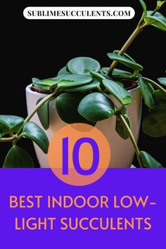 Check out our compilation for the best low-light succulents for indoor gardening. Here are your options for easy and low-maintenance plants that are perfect to keep indoors. Find your options on this pin! #succulents #lowlightsucculents #indoorgardening #outdoorgardening #gardeningtips